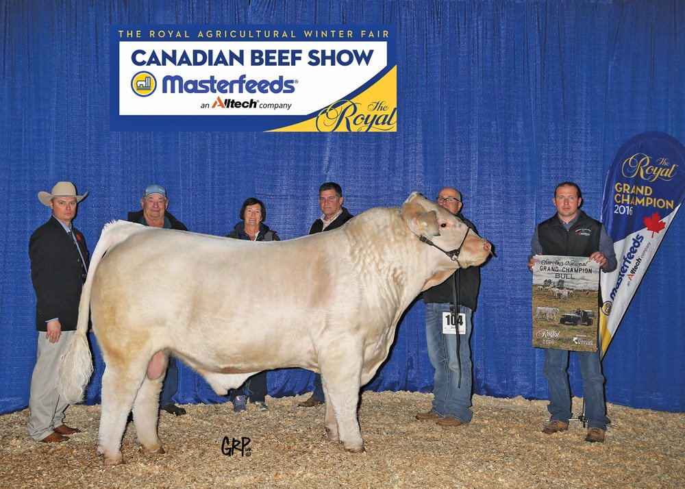 Royal Fair Prize Bull